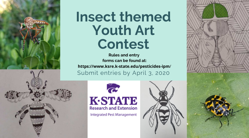 2020 Insect Art Contest